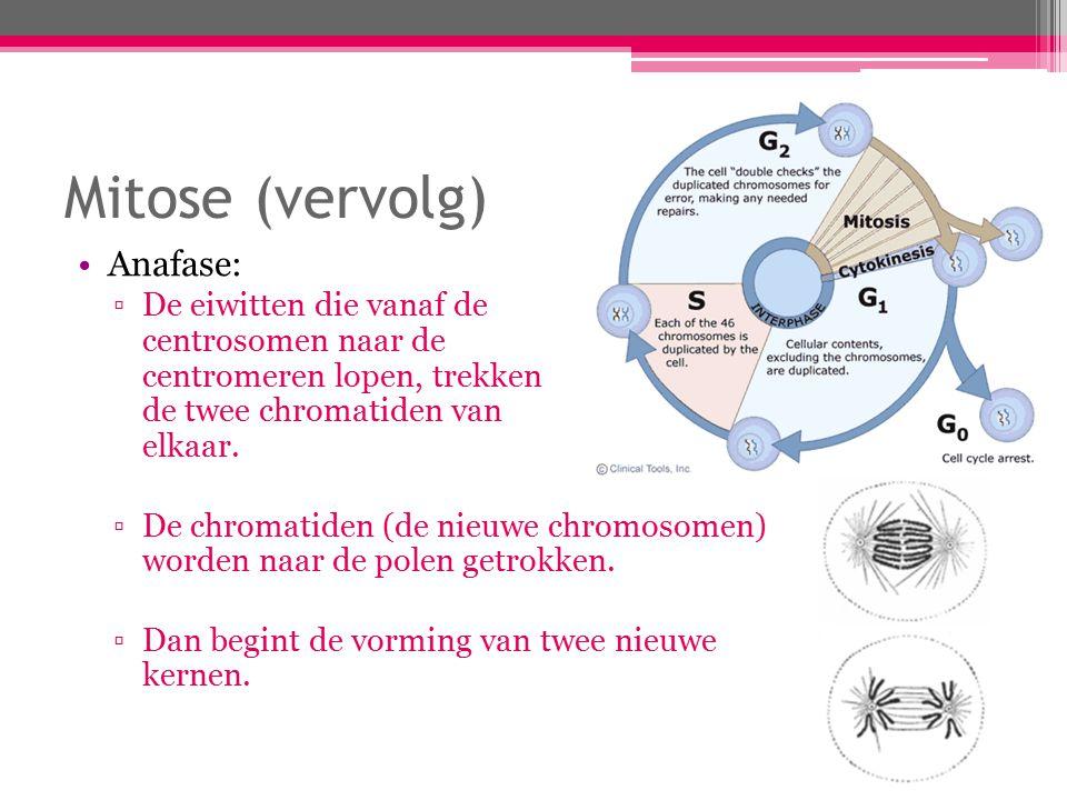 Mitose (vervolg) Anafase: