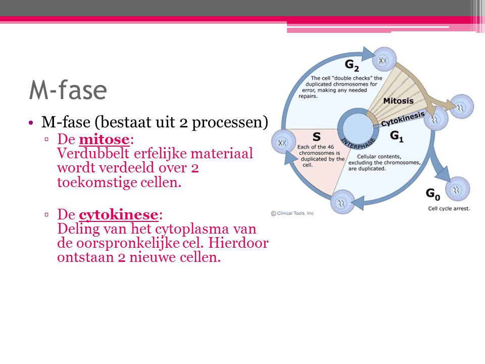 M-fase M-fase (bestaat uit 2 processen):