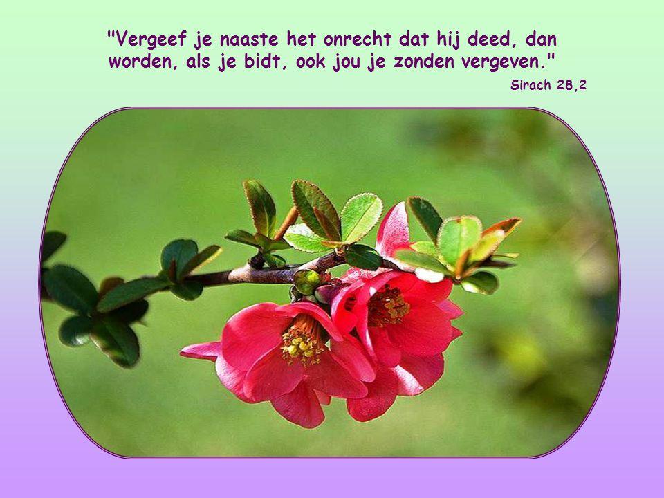 Vergeef je naaste het onrecht dat hij deed, dan worden, als je bidt, ook jou je zonden vergeven.