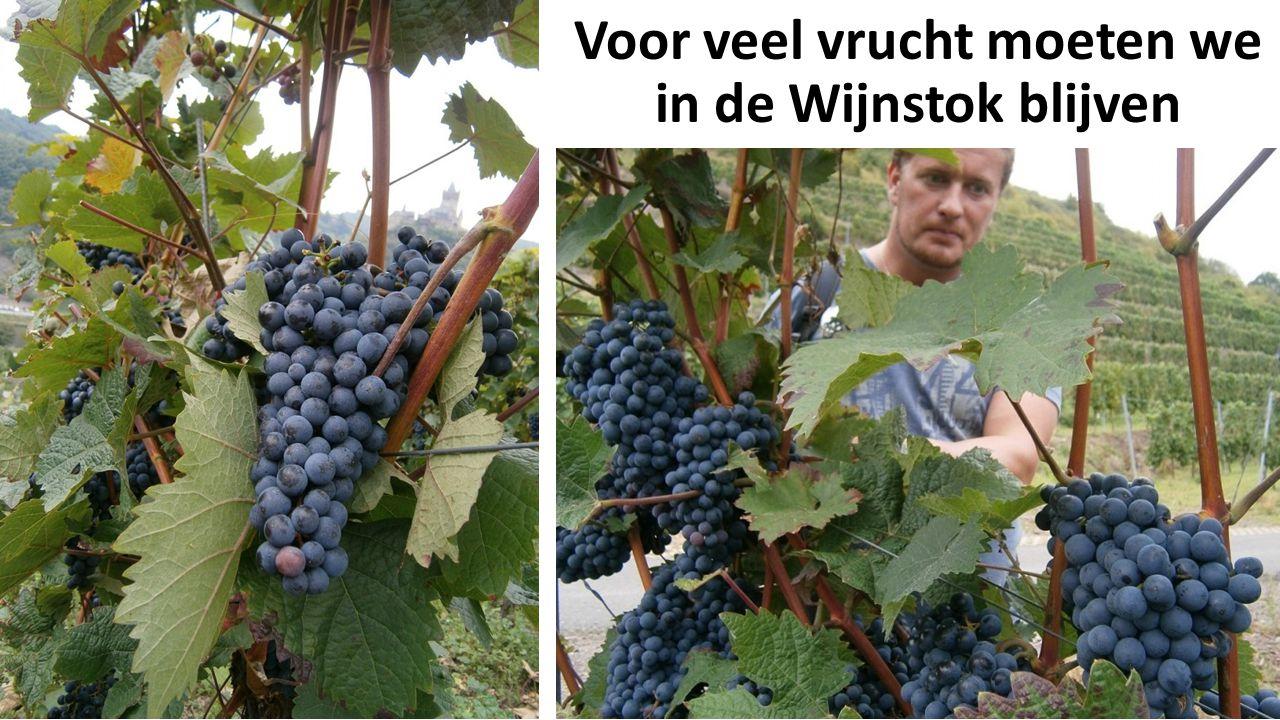 Voor veel vrucht moeten we in de Wijnstok blijven