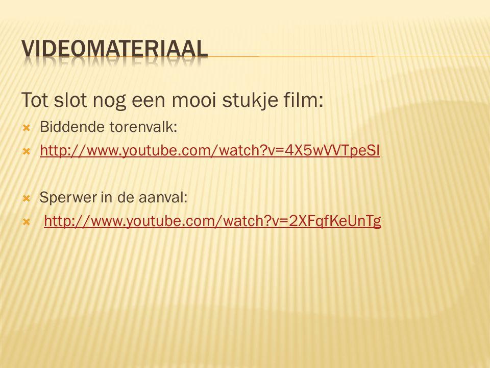 Videomateriaal Tot slot nog een mooi stukje film: Biddende torenvalk: