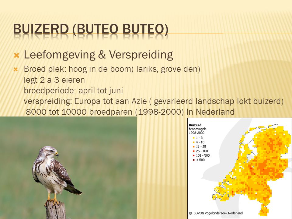 Buizerd (buteo buteo) Leefomgeving & Verspreiding