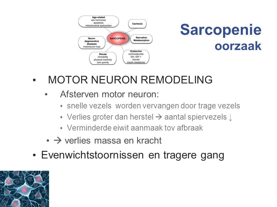 Sarcopenie oorzaak MOTOR NEURON REMODELING
