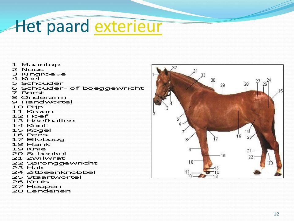 Het paard exterieur