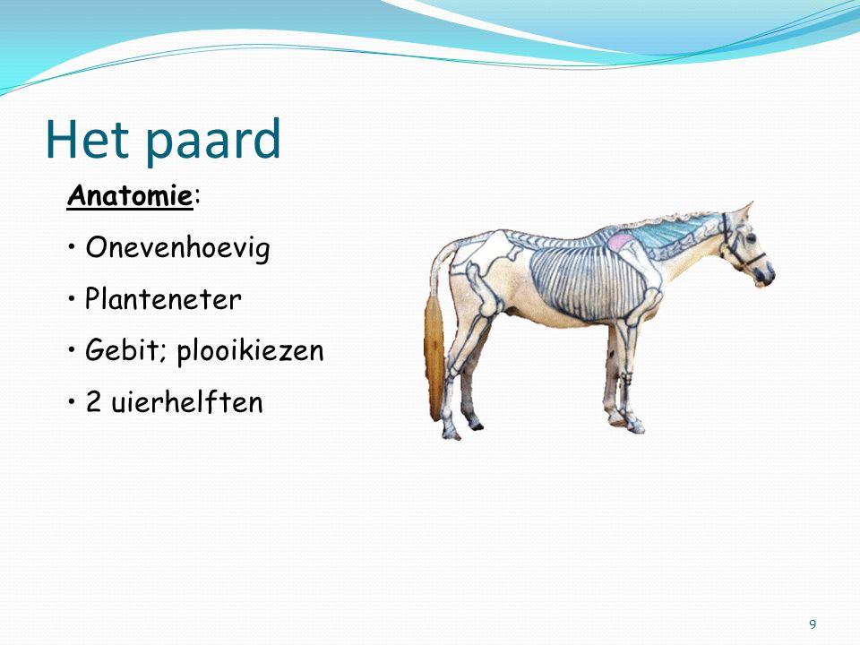 Het paard Anatomie: Onevenhoevig Planteneter Gebit; plooikiezen