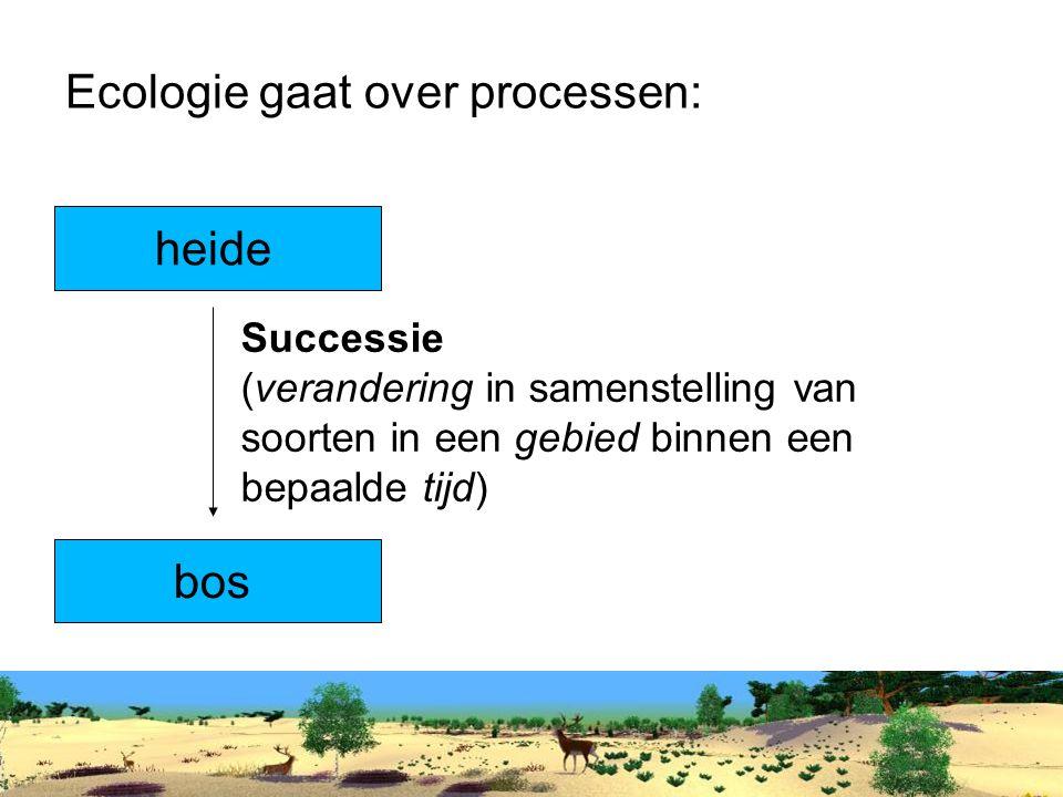 Ecologie gaat over processen:
