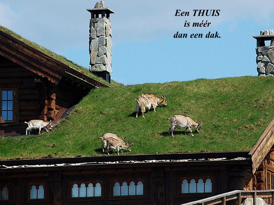 Een THUIS is méér dan een dak.