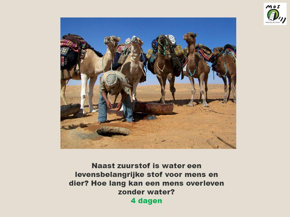 Naast zuurstof is water een levensbelangrijke stof voor mens en dier