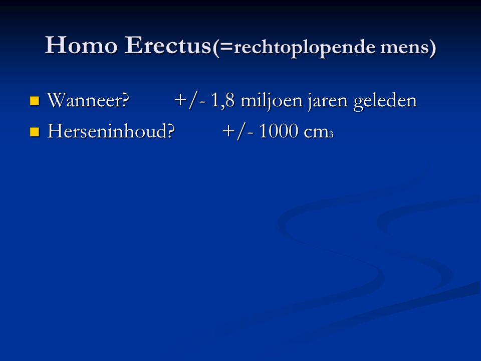 Homo Erectus(=rechtoplopende mens)