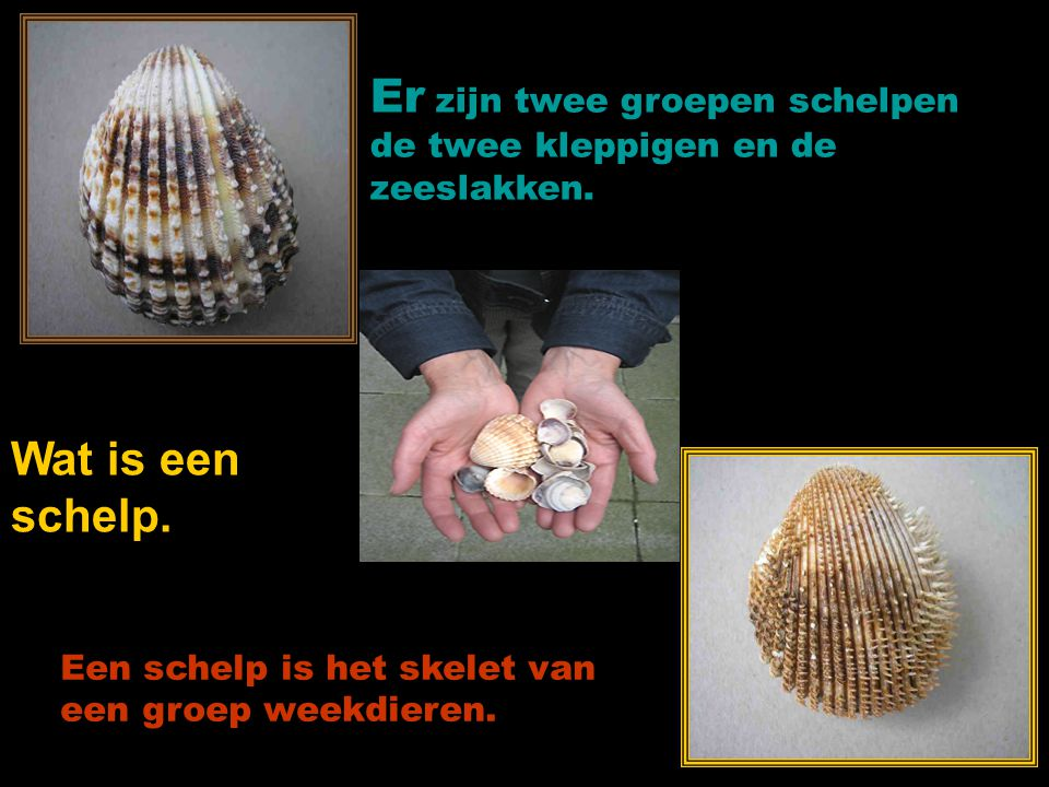 gemaakt voor: www.powerpointsite-bep.nl