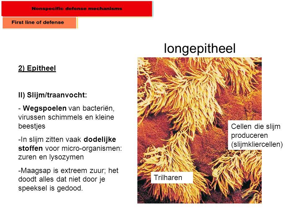 longepitheel 2) Epitheel II) Slijm/traanvocht:
