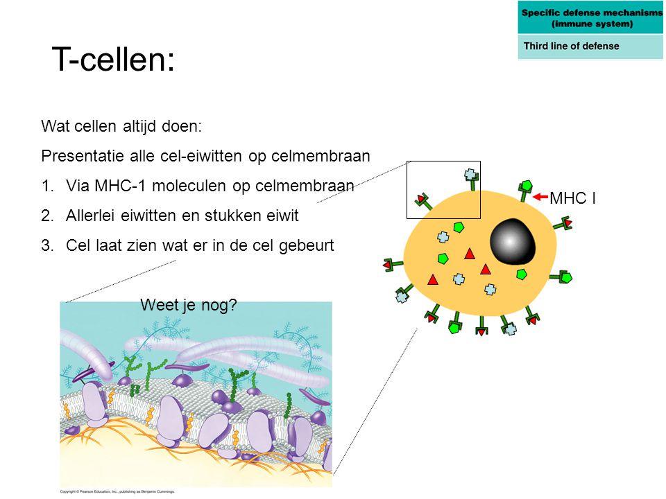 T-cellen: Wat cellen altijd doen: