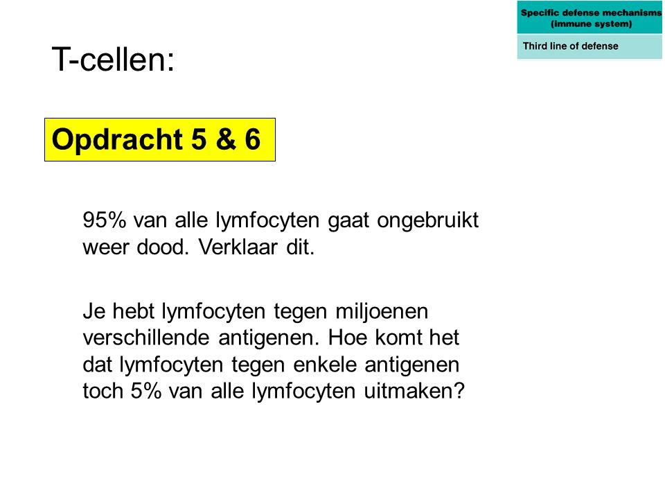 T-cellen: Opdracht 5 & 6. 95% van alle lymfocyten gaat ongebruikt weer dood. Verklaar dit.