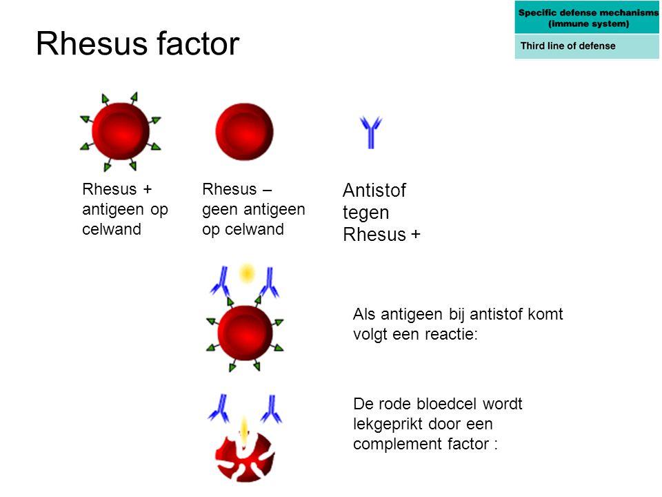 Rhesus factor Antistof tegen Rhesus + Rhesus + antigeen op celwand