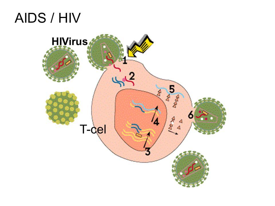 AIDS / HIV HIVirus T-cel