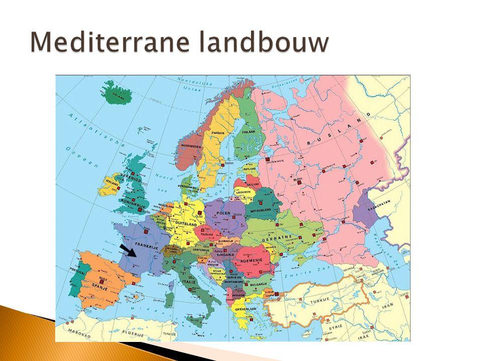 Mediterrane landbouw