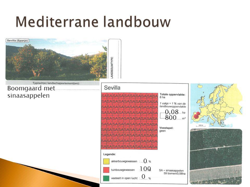 Mediterrane landbouw Boomgaard met sinaasappelen 0,08 800 100