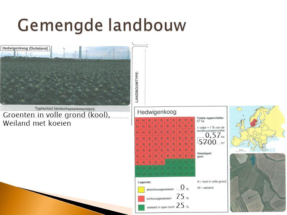 Gemengde landbouw Groenten in volle grond (kool), Weiland met koeien