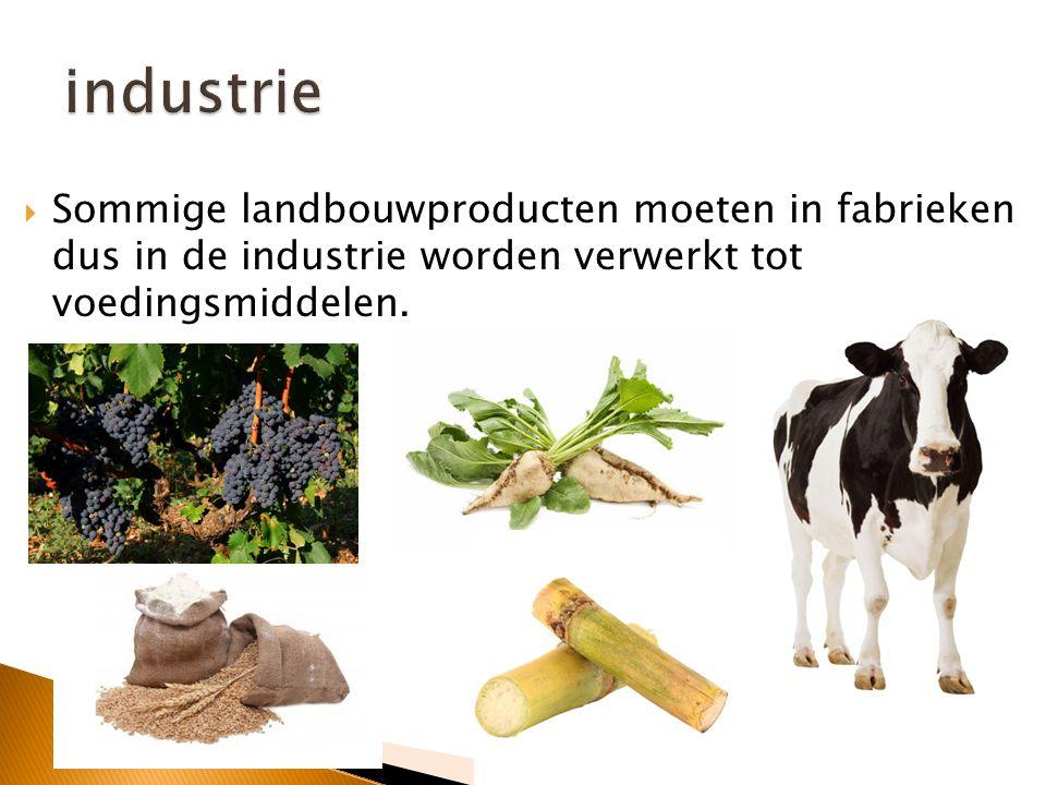 industrie Sommige landbouwproducten moeten in fabrieken dus in de industrie worden verwerkt tot voedingsmiddelen.