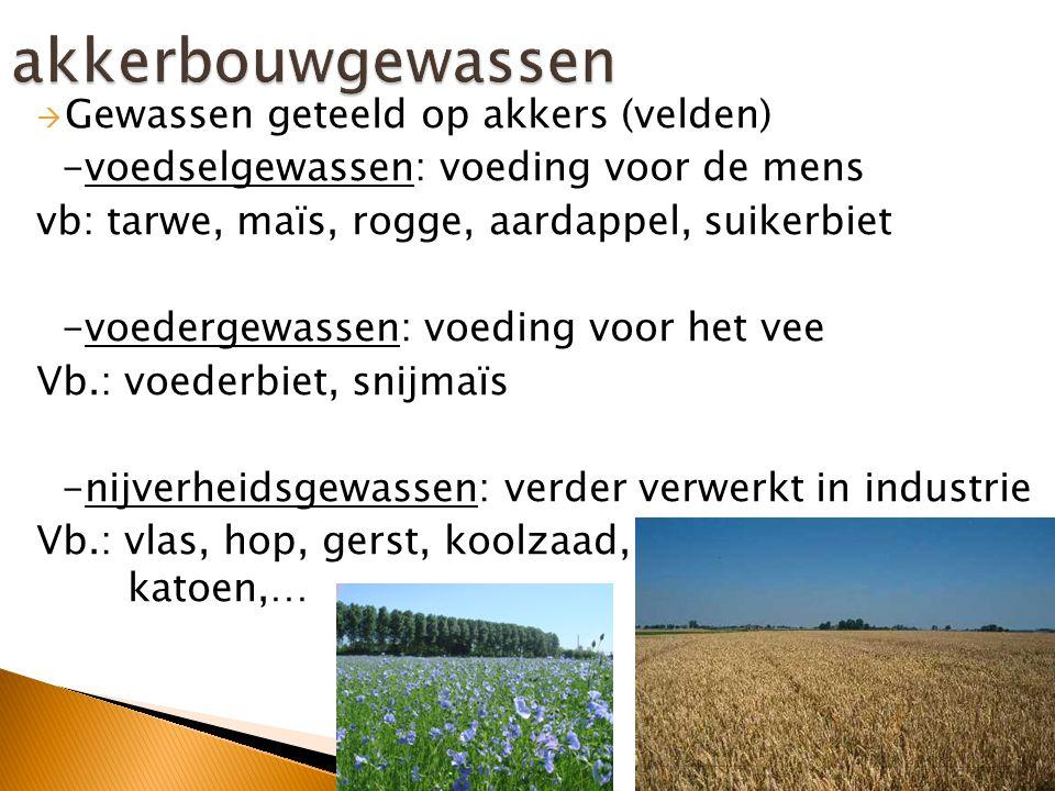 akkerbouwgewassen Gewassen geteeld op akkers (velden)