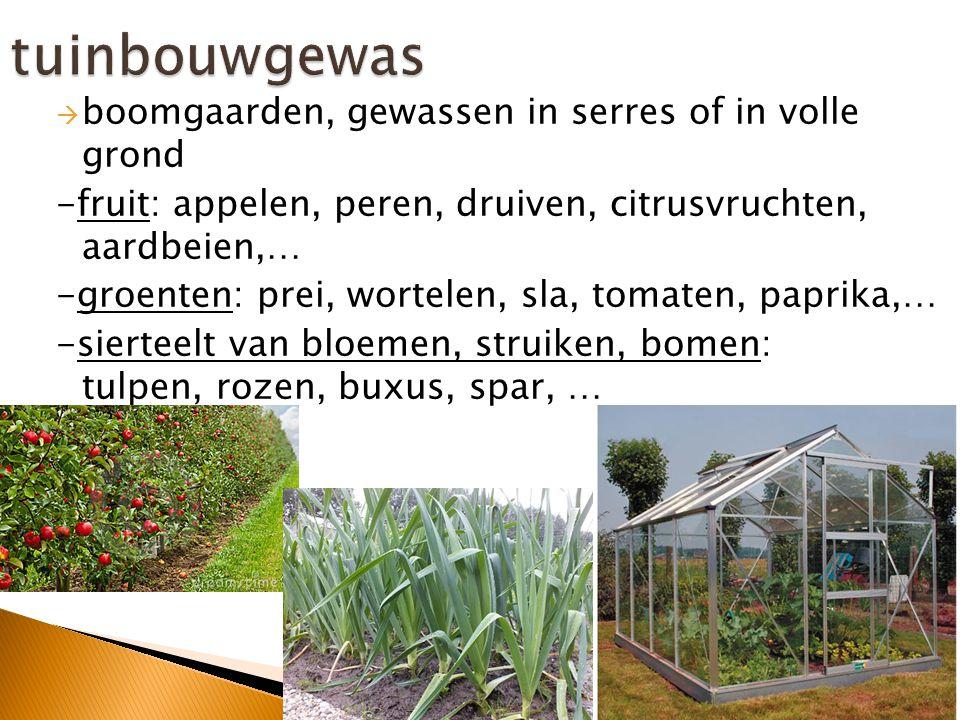 tuinbouwgewas boomgaarden, gewassen in serres of in volle grond