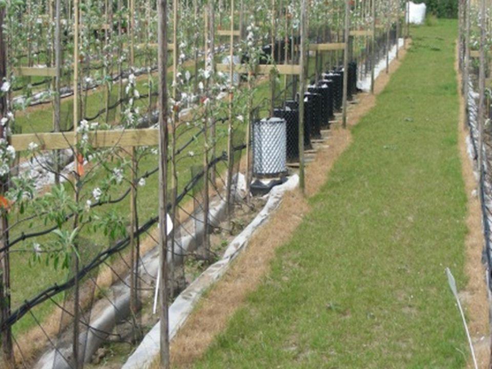 Appelbomen in sleuven in de grond gevuld met substraat, bij In