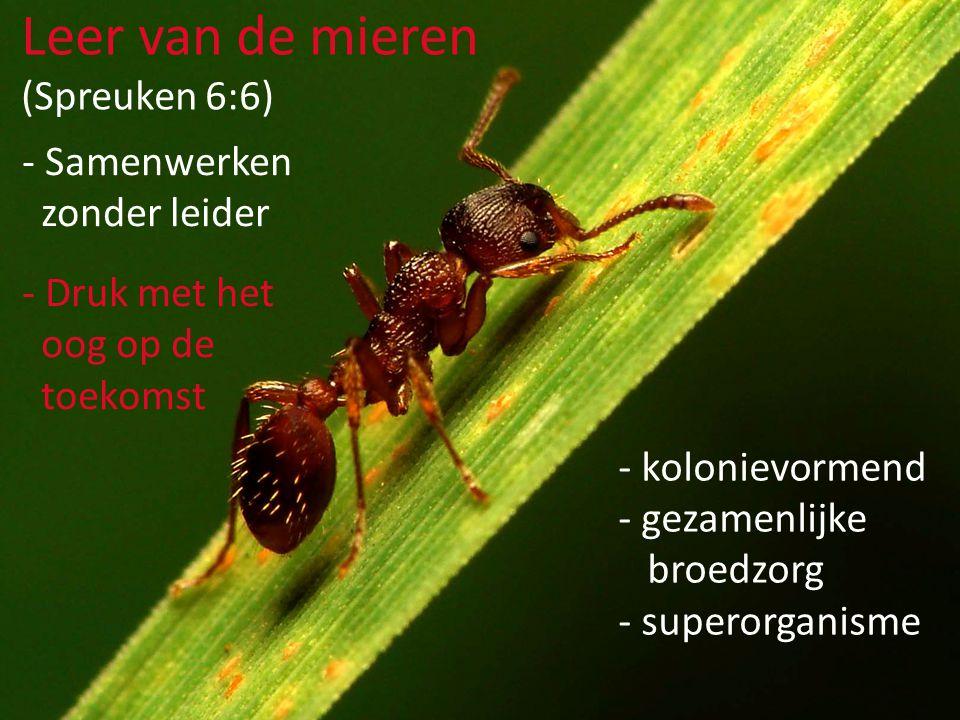 Leer van de mieren (Spreuken 6:6) Samenwerken zonder leider