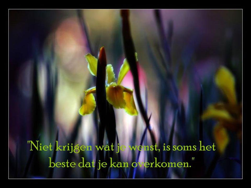 Niet krijgen wat je wenst, is soms het beste dat je kan overkomen.