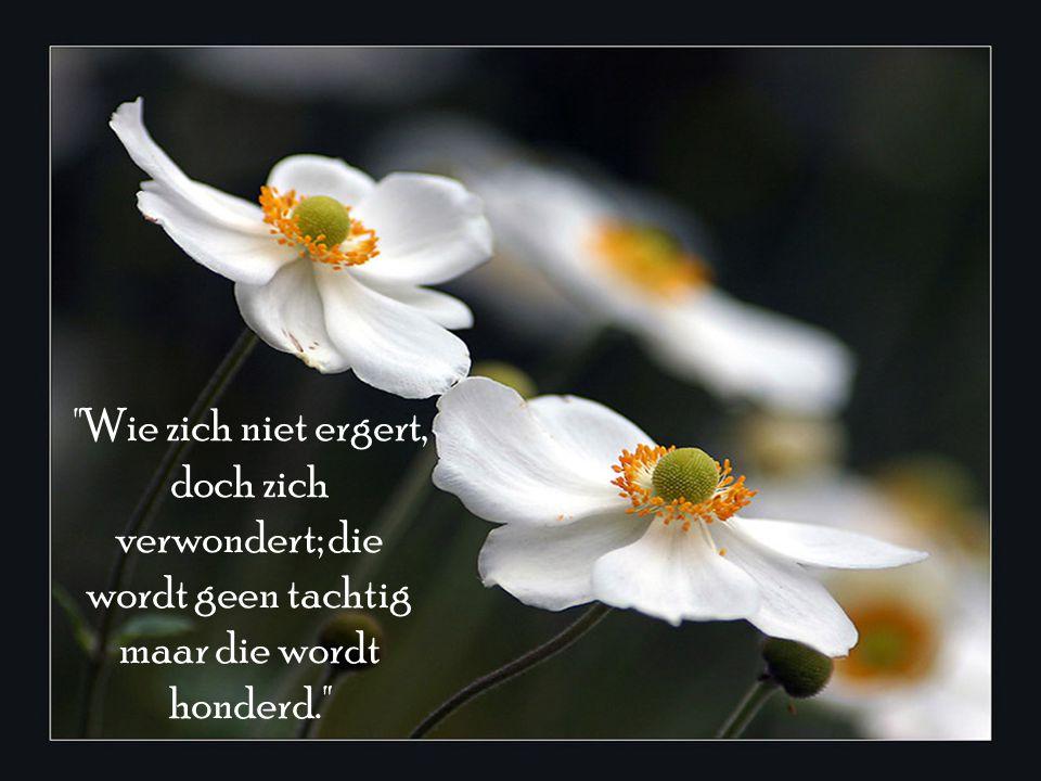Wie zich niet ergert, doch zich verwondert; die wordt geen tachtig maar die wordt honderd.