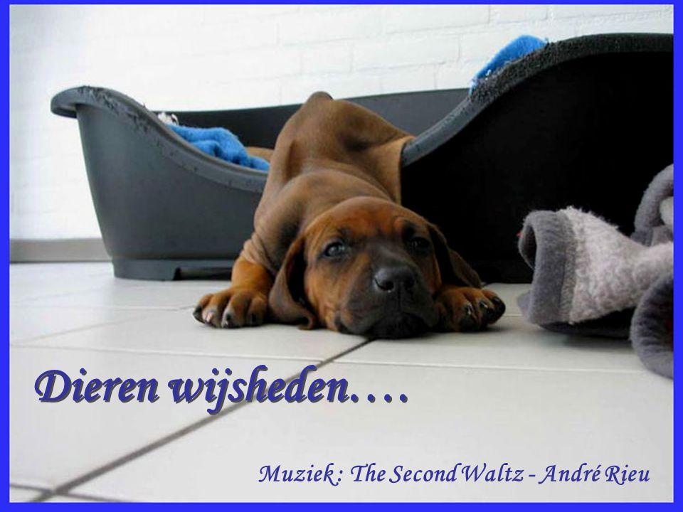 Dieren wijsheden…. Muziek : The Second Waltz - André Rieu
