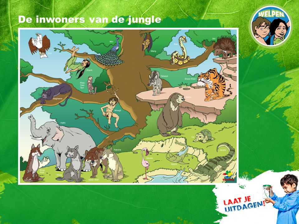 De inwoners van de jungle