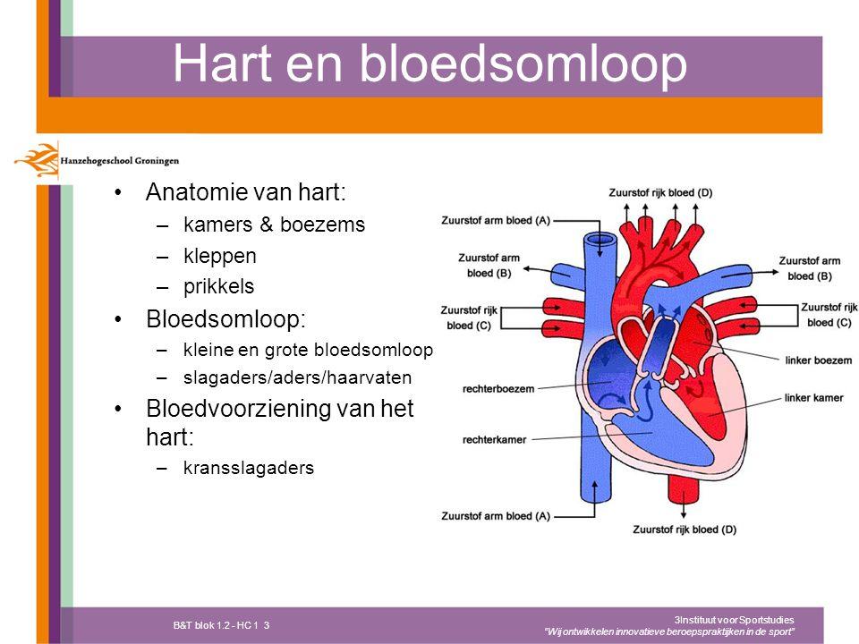 Hart en bloedsomloop Anatomie van hart: Bloedsomloop: