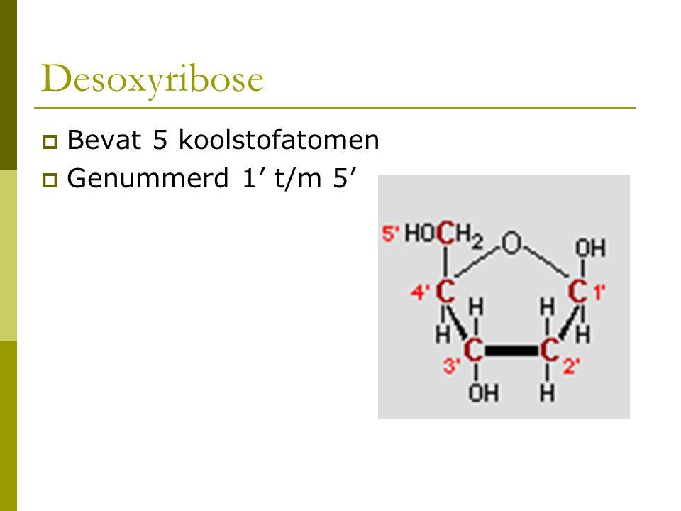 Desoxyribose Bevat 5 koolstofatomen Genummerd 1' t/m 5'