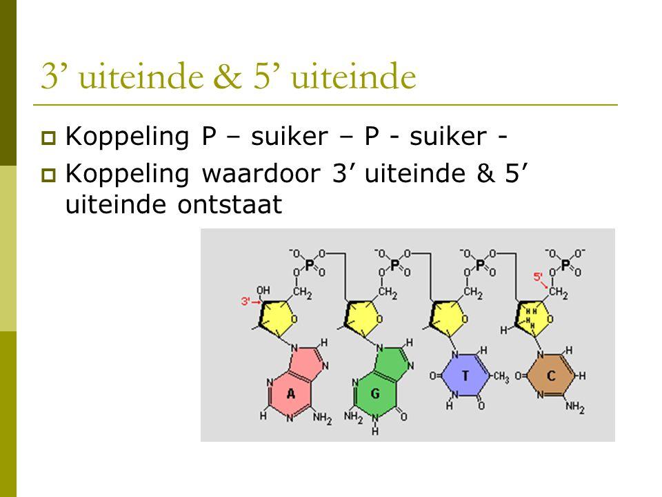 3' uiteinde & 5' uiteinde Koppeling P – suiker – P - suiker -