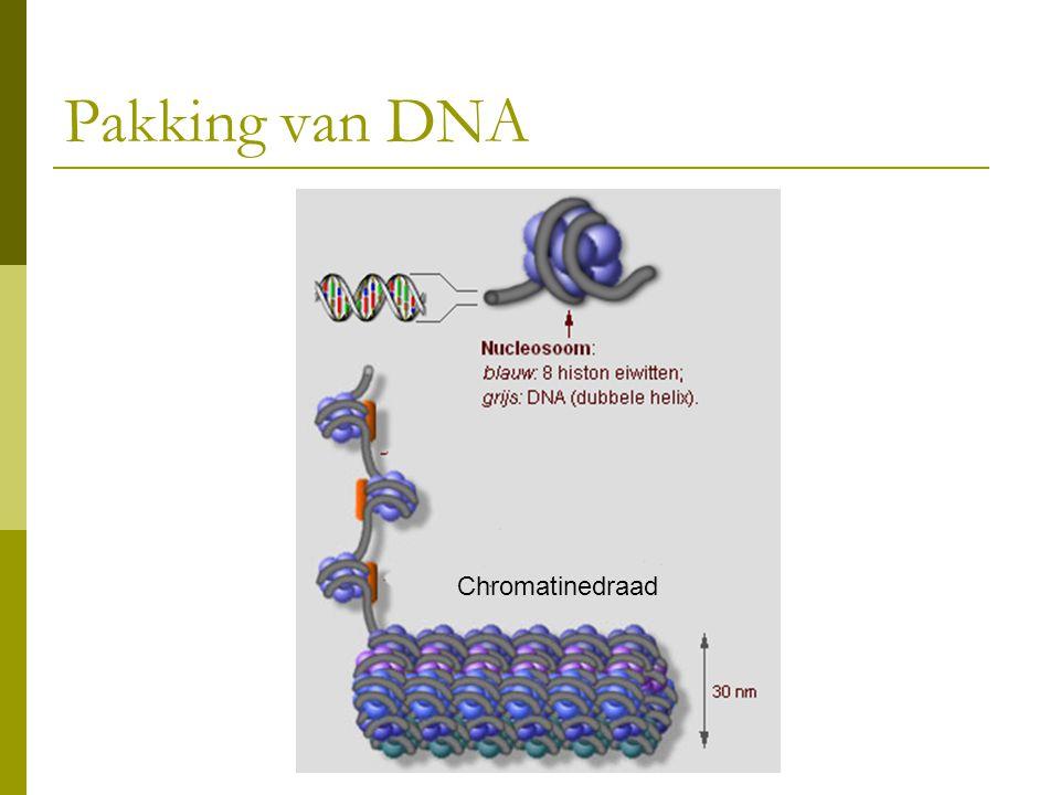Pakking van DNA Chromatinedraad
