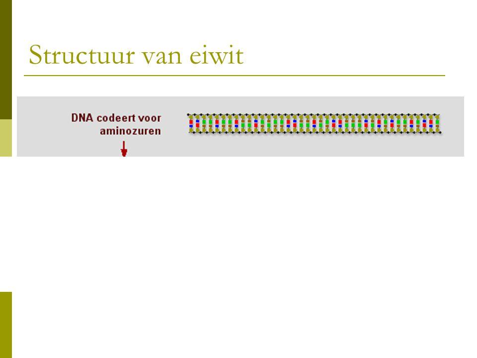Structuur van eiwit