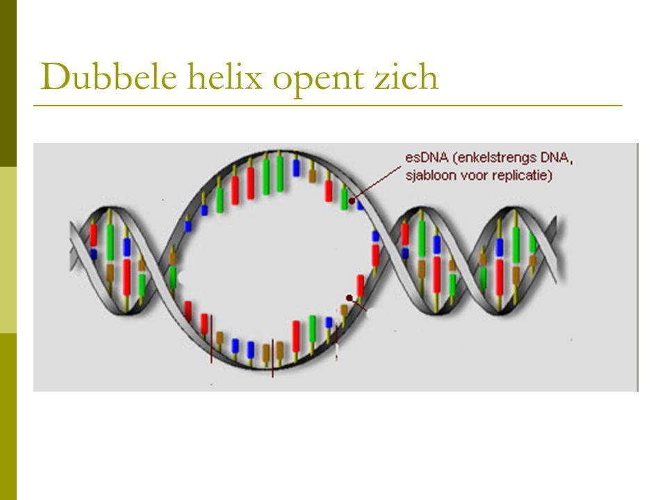 Dubbele helix opent zich