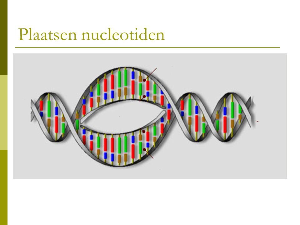 Plaatsen nucleotiden
