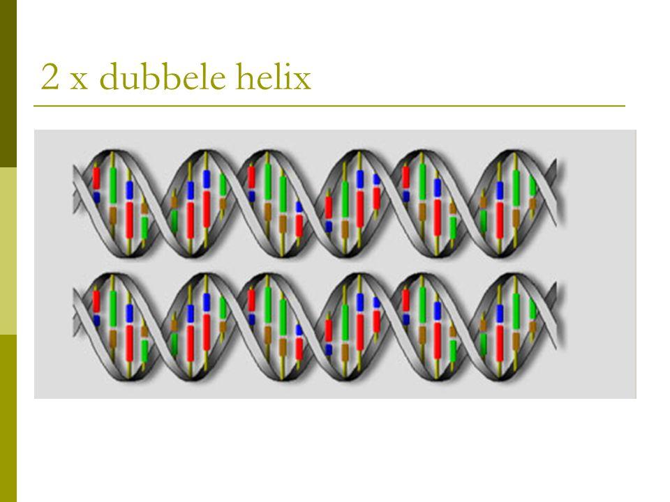 2 x dubbele helix