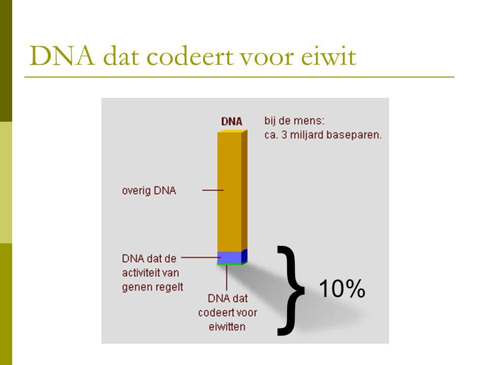 DNA dat codeert voor eiwit