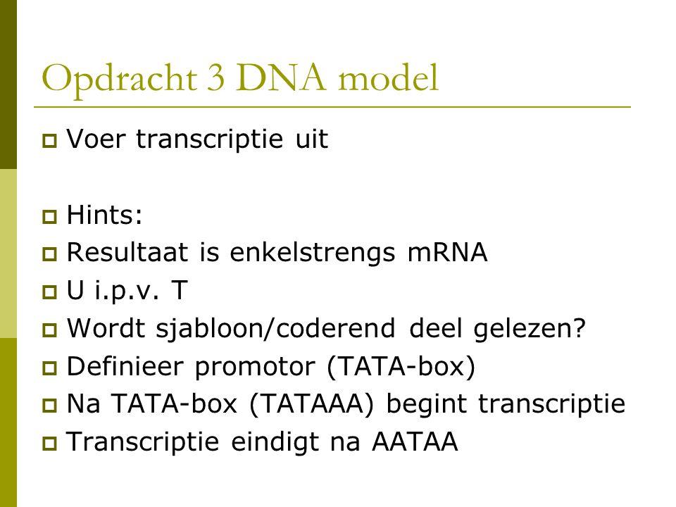 Opdracht 3 DNA model Voer transcriptie uit Hints:
