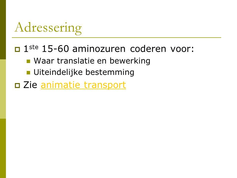 Adressering 1ste 15-60 aminozuren coderen voor: Zie animatie transport