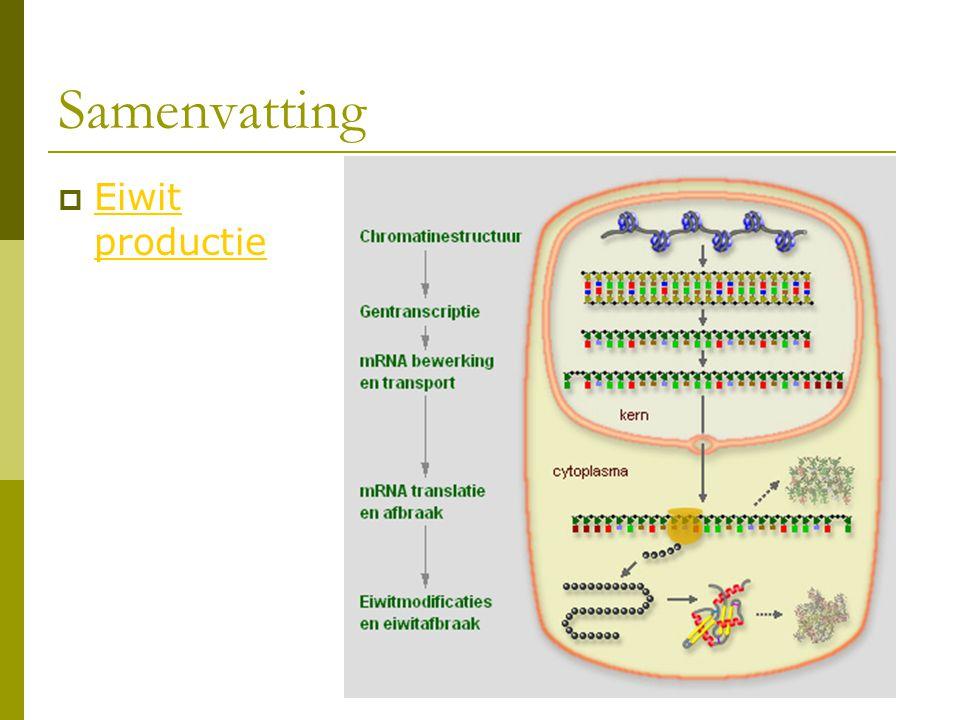 Samenvatting Eiwit productie