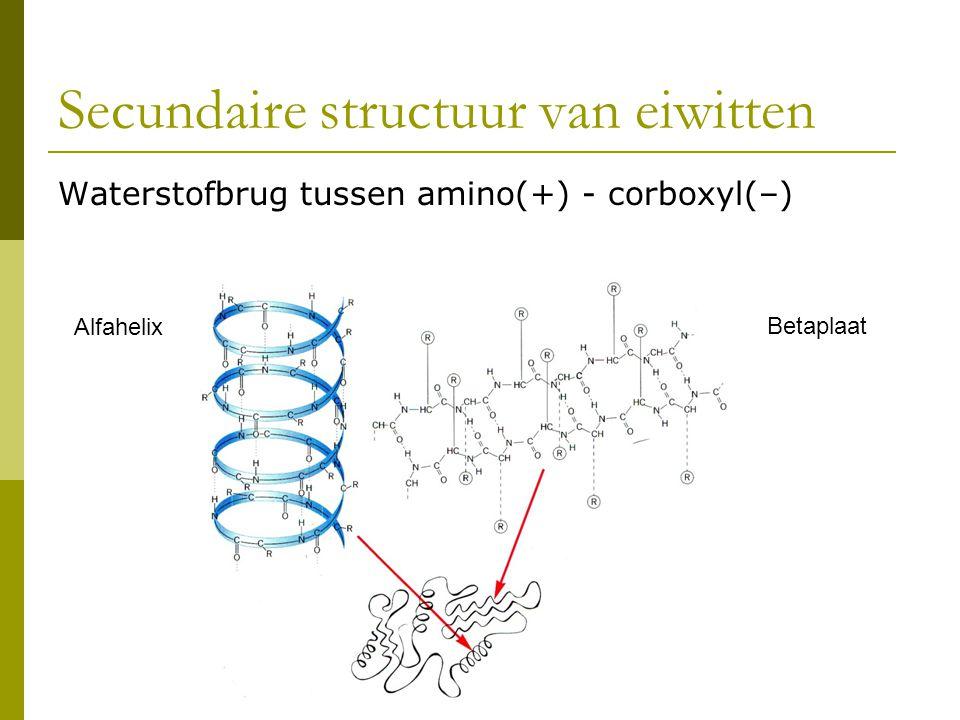 Secundaire structuur van eiwitten