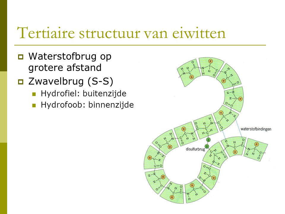 Tertiaire structuur van eiwitten