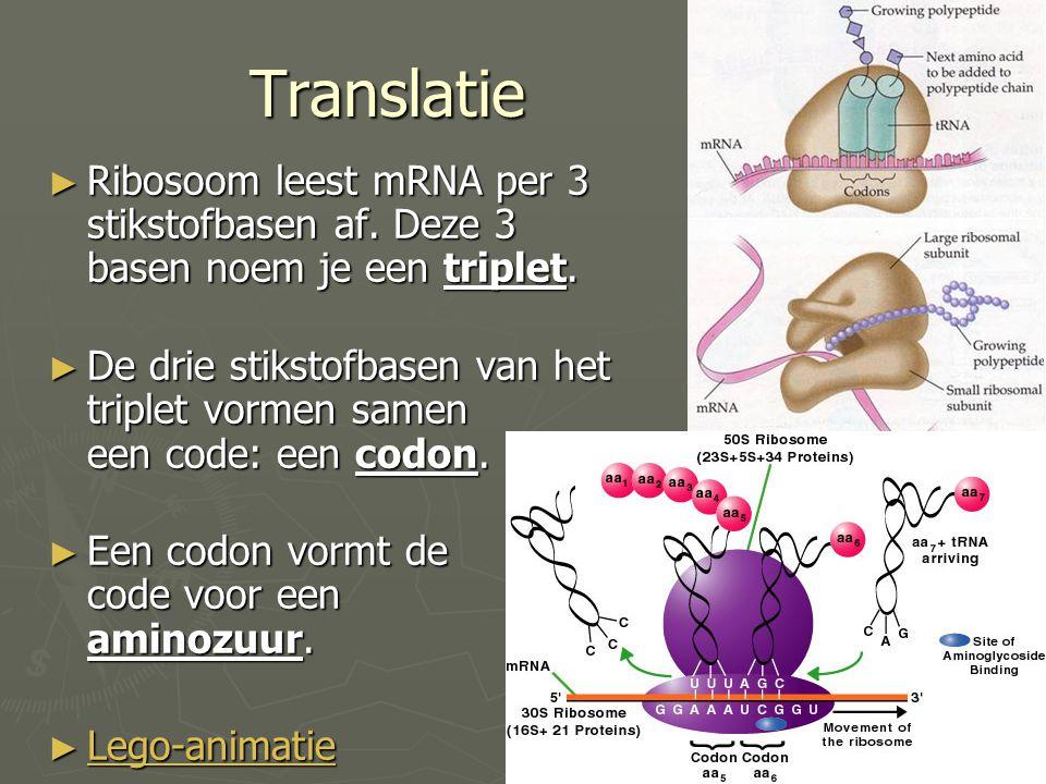 Translatie Ribosoom leest mRNA per 3 stikstofbasen af. Deze 3 basen noem je een triplet.