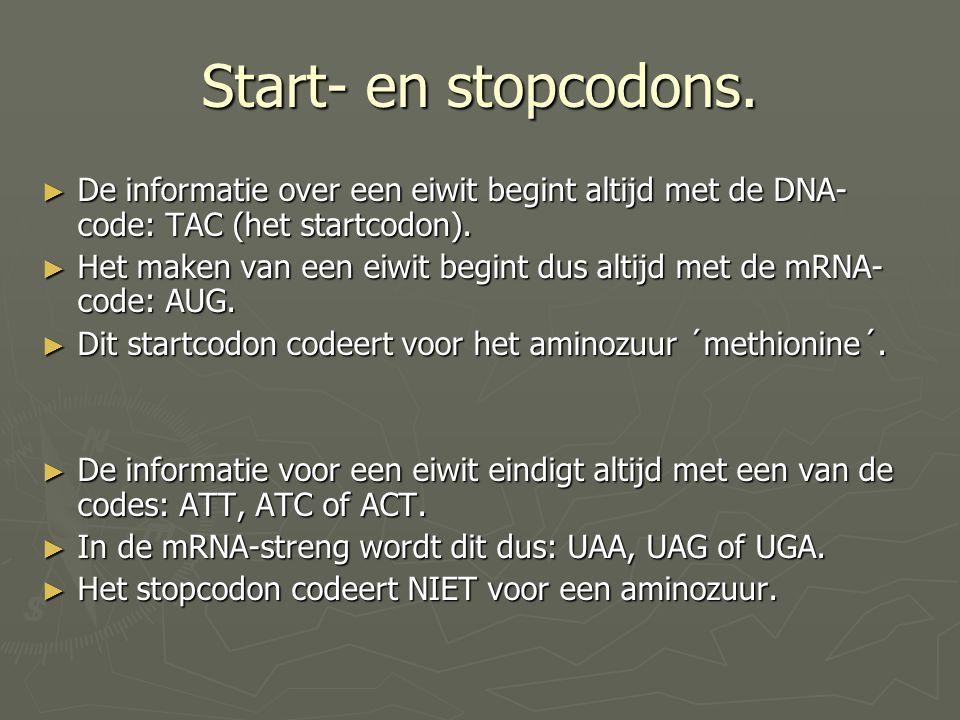 Start- en stopcodons. De informatie over een eiwit begint altijd met de DNA-code: TAC (het startcodon).
