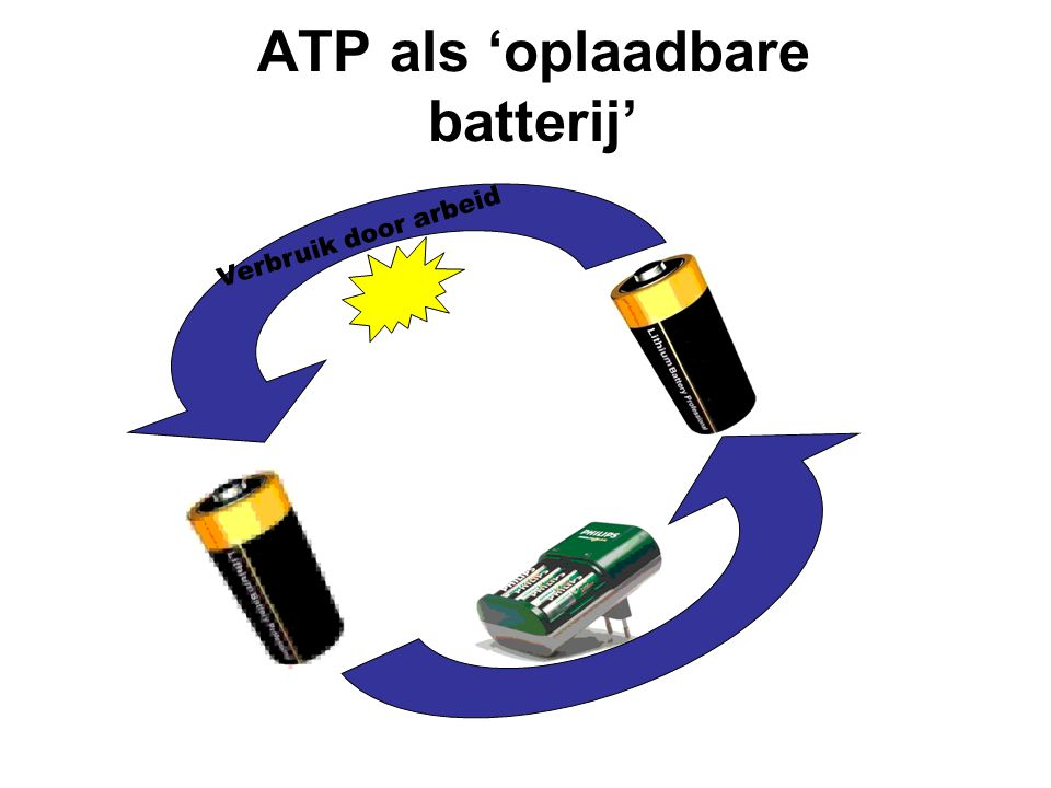ATP als 'oplaadbare batterij'