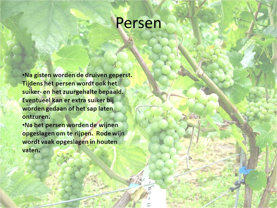 Persen