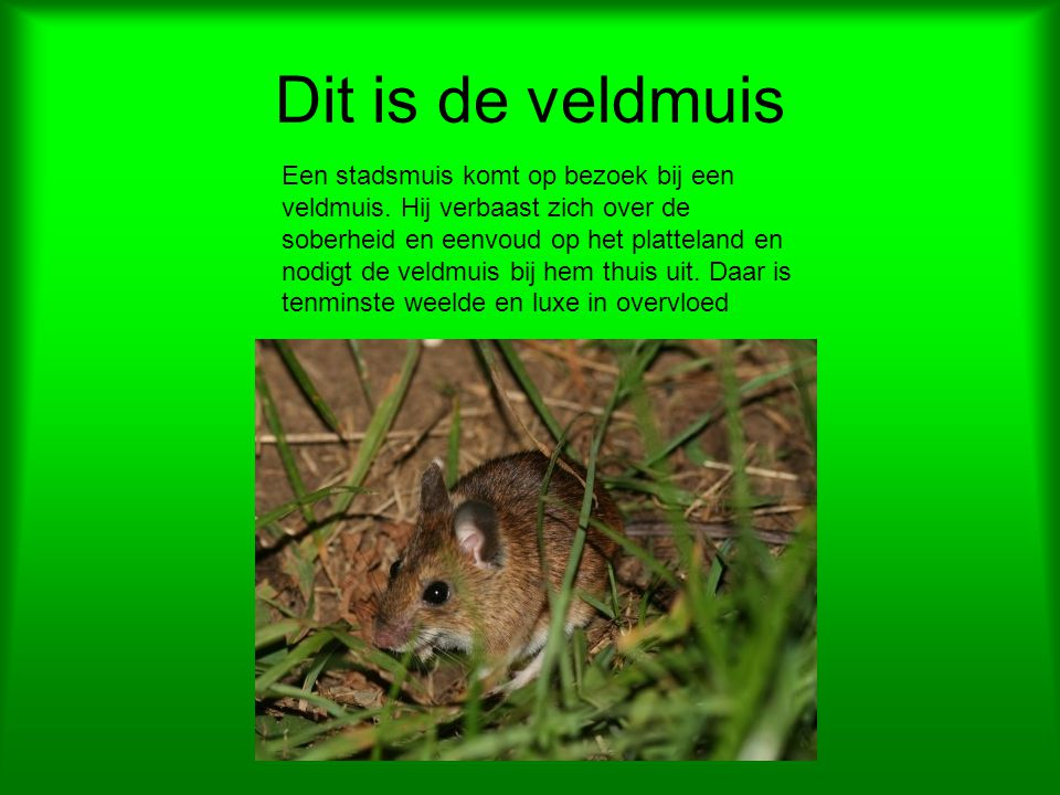 Dit is de veldmuis